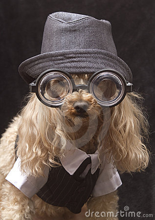 Literary Poodle