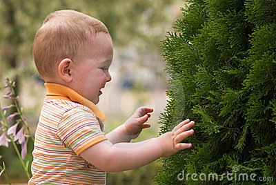 Litle boy is playing with fir tree