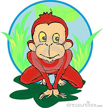 Litle chimpanzee