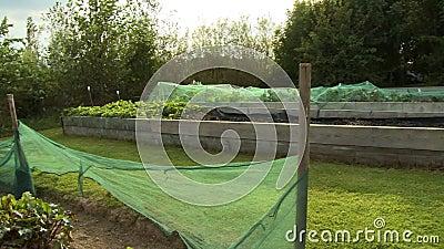 Lits de jardin dans le jardin clips vidéos