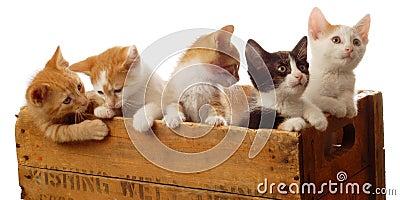 Litter of five kittens