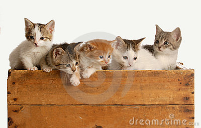 Litter of five kittens