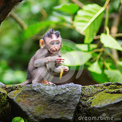 Free Little Baby-monkey In Sacred Monkey Forest Of Ubud Stock Photography - 44011372