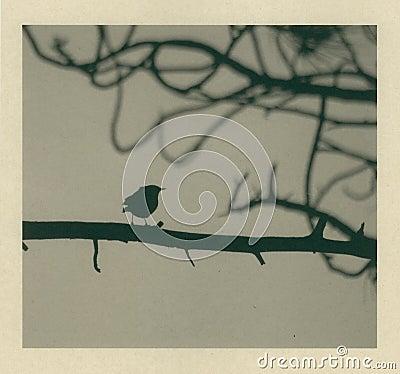 Little Bird Blown