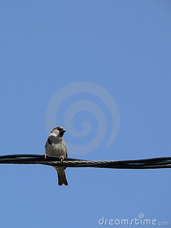 little bird with blue sky 1