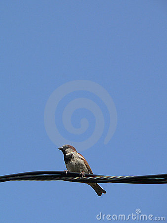 little bird with blue sky 4