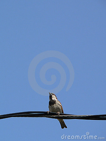little bird with blue sky 5