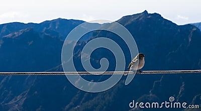 Little bird at high altitude Stock Photo