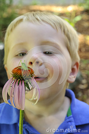 Little boy looking at insect