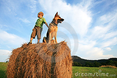 Little boy with big dog on the meadow during summe