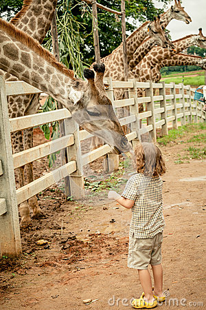 Free Little Boy Feeding A Giraffe At The Zoo Stock Image - 46341041