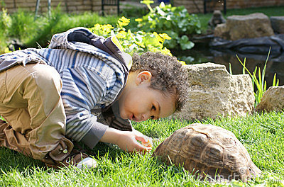 Little boy feeding his tortoise