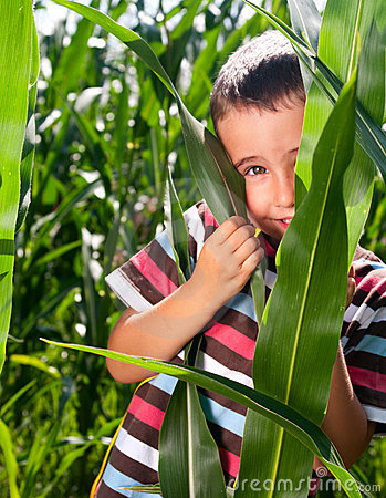 Little boy hide in corn