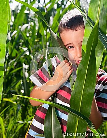 Little boy hide in corn