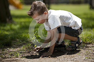 Little boy planting