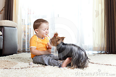Little boy playing with loving dog york