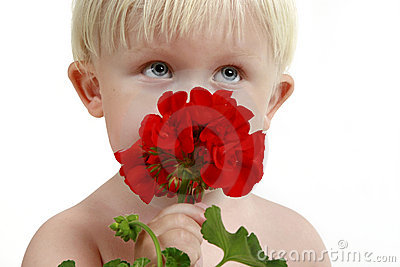 Little boy smells a red flower