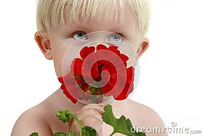 Little boy smells a red flower