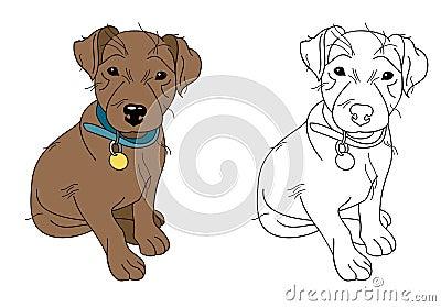 Little brown puppy wearing blue dog collar
