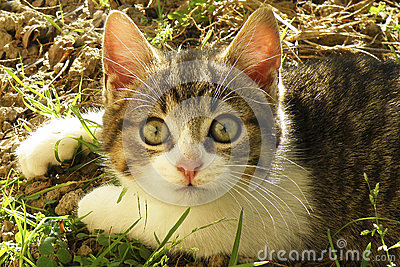 Little cat with big green eyes