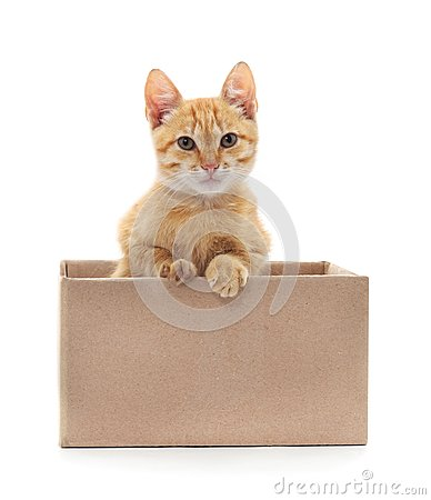 Free Little Cat In The Box. Stock Photography - 110319602