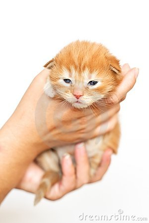 Little cat Mały kotek