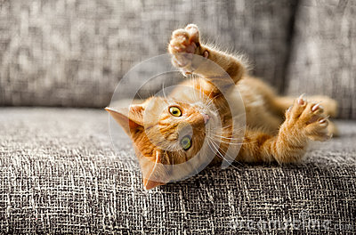 Little cat playing
