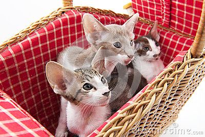 Little cats hiding in picnic basket