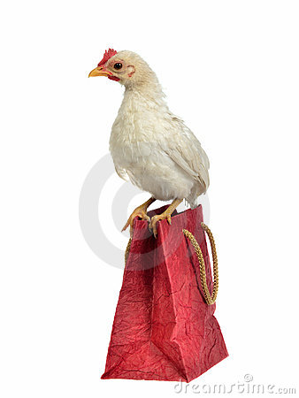 Little chicken sitting on shopping bag