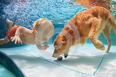 Little child swim underwater and play with dog stock photo image 70707941 for How to train your dog to swim in the pool