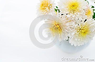 A little chrysanthemum bunch
