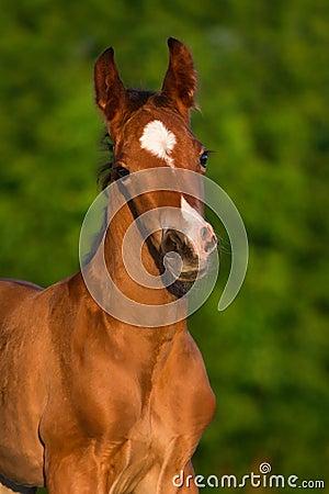 Free Little Colt Horse Stock Photos - 55617073