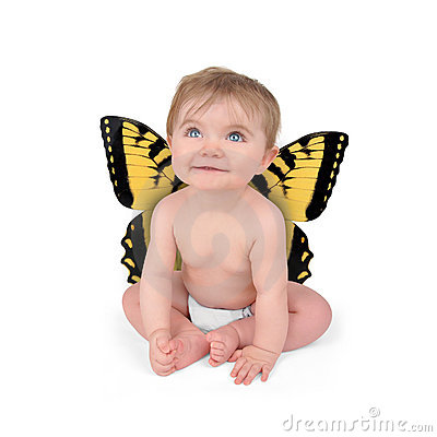 Free Little Cute Baby Butterfly On White Background Royalty Free Stock Images - 19100809