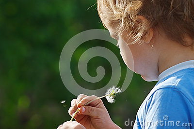 Little cute boy is blowing a dandelion