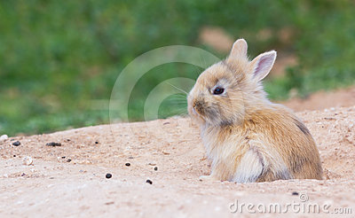 Little cute bunny