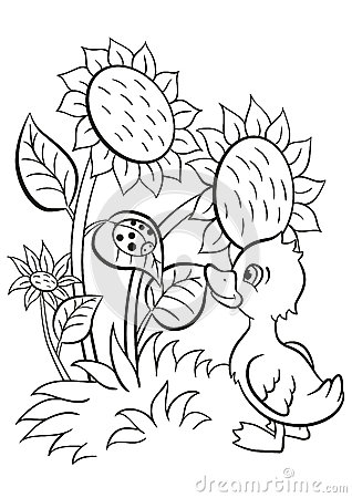Little cute duckling looks at the ladybug stock vector for Cute ladybug coloring pages