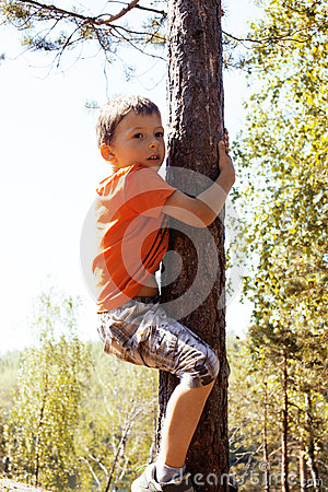 Free Little Cute Real Boy Climbing On Tree Hight, Outdoor Lifestyle C Royalty Free Stock Photo - 82537225