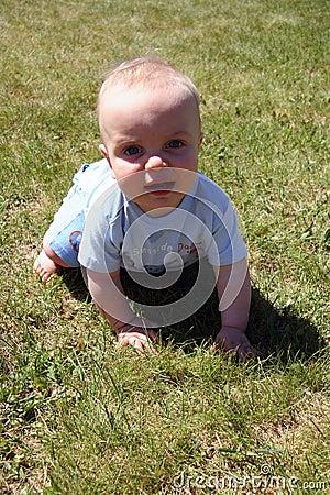 Little Cutie in Grass