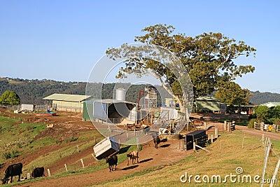 Australia, Queensland: Little Dairy Farm