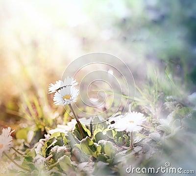 Free Little Daisy (spring Daisy) Stock Photos - 39874383