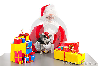 Little dog as gift for Christmas