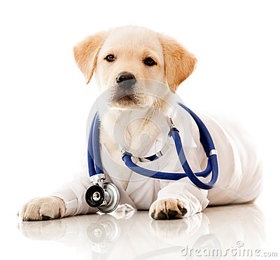 Little dog as a vet