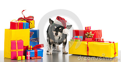 Little dog between the gifts