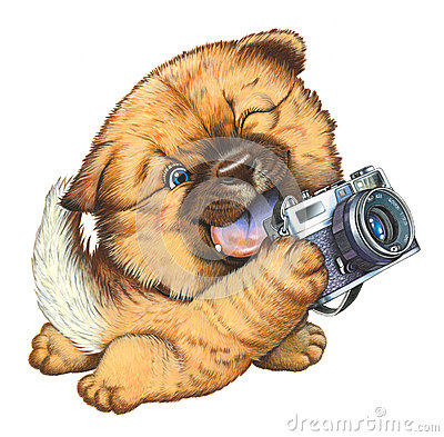 A little dog holding a camera