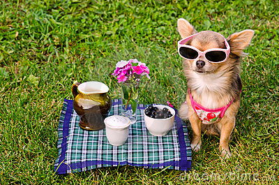 Little dog wearing t-shirt relaxing in meadow