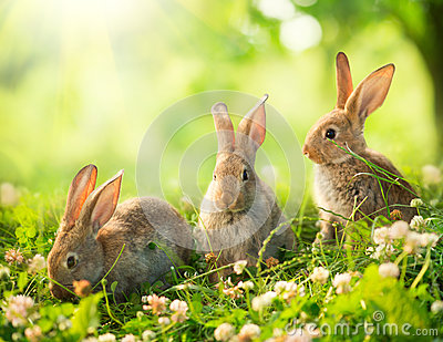 Little Easter Bunnies