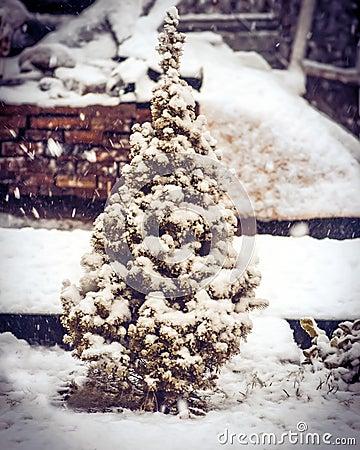 Little Fir Tree/ hardback/ Cooney/ christmas/1985/Margaret Wise Brown