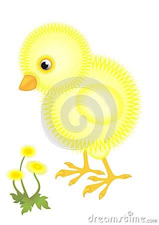 Little fluffy chick