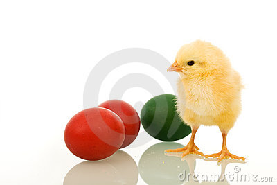 Little fluffy Easter chicken with dyed eggs