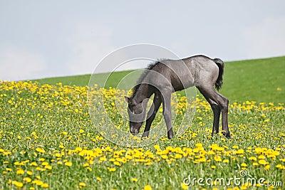 Little foal in field